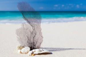 белый песок 2